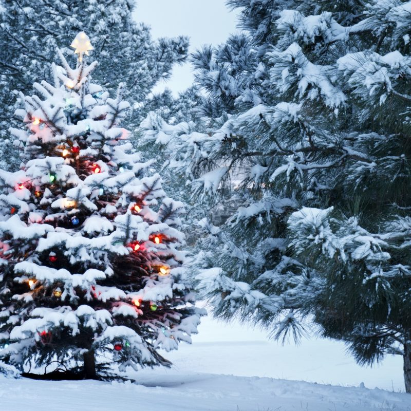 10 Most Popular Christmas Tree Snow Wallpaper Hd FULL HD 1080p For PC Desktop 2020 free download beautiful outdoor christmas tree e29da4 4k hd desktop wallpaper for 4k 800x800