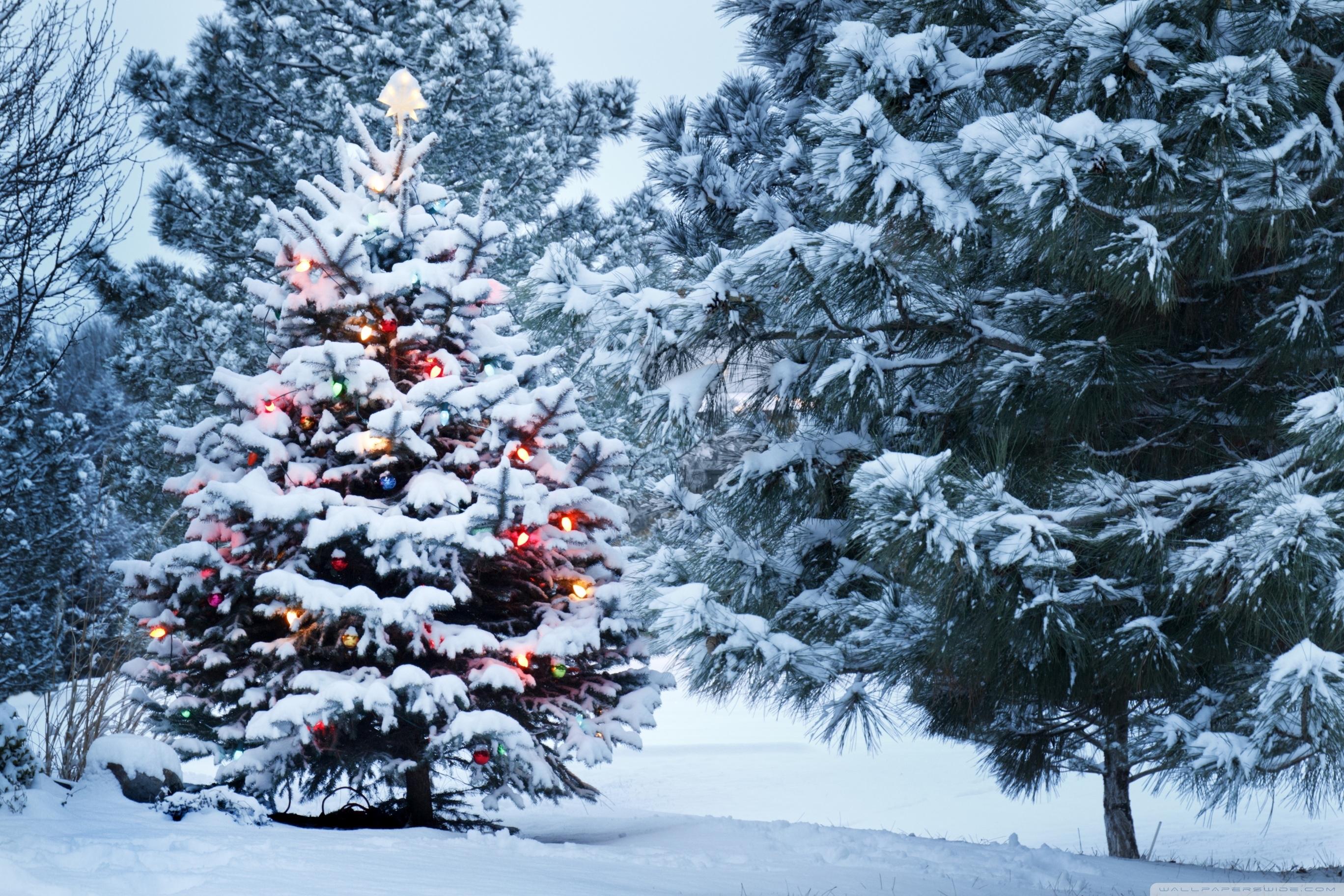 beautiful outdoor christmas tree ❤ 4k hd desktop wallpaper for 4k