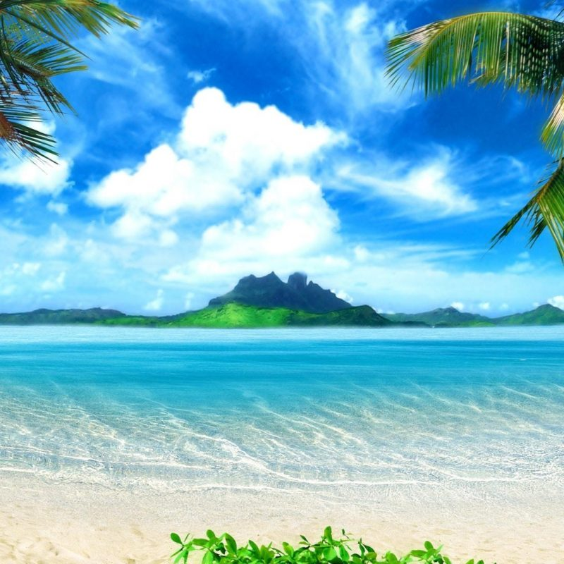 10 Most Popular Beautiful Beach Backgrounds Palm Trees FULL HD 1920×1080 For PC Desktop 2020 free download beautiful palm trees on beach wallpaper download hd beautiful palm 800x800