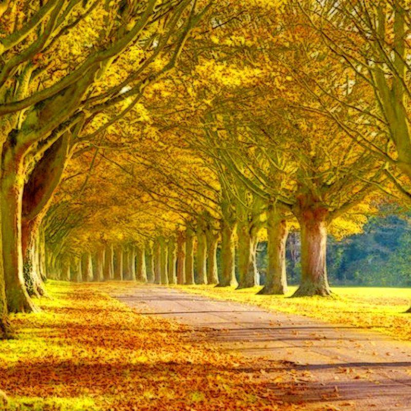 10 Top Beautiful Sceneries Wallpapers For Desktop FULL HD 1920×1080 For PC Desktop 2021 free download beautiful scenery landscape wallpaper hd desktop background 1 800x800