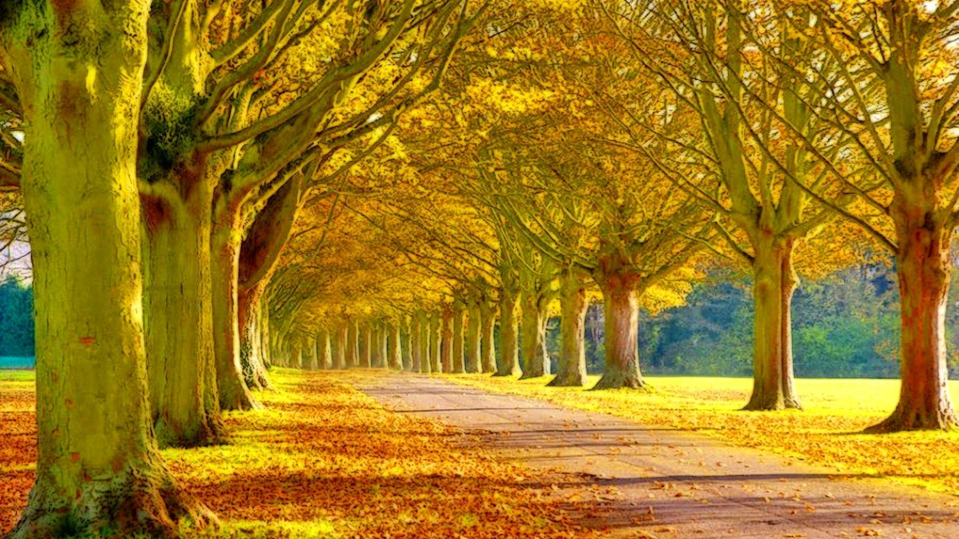 beautiful scenery landscape wallpaper   hd desktop background