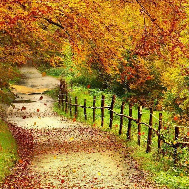 10 Top Beautiful Sceneries Wallpapers For Desktop FULL HD 1920×1080 For PC Desktop 2021 free download beautiful scenery place for free hd wallpapers desktop 800x800