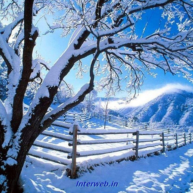 10 Top Beautiful Snow Falling Wallpapers FULL HD 1080p For PC Desktop 2018 free download beautiful snow wallpapers wallpaper cave 800x800
