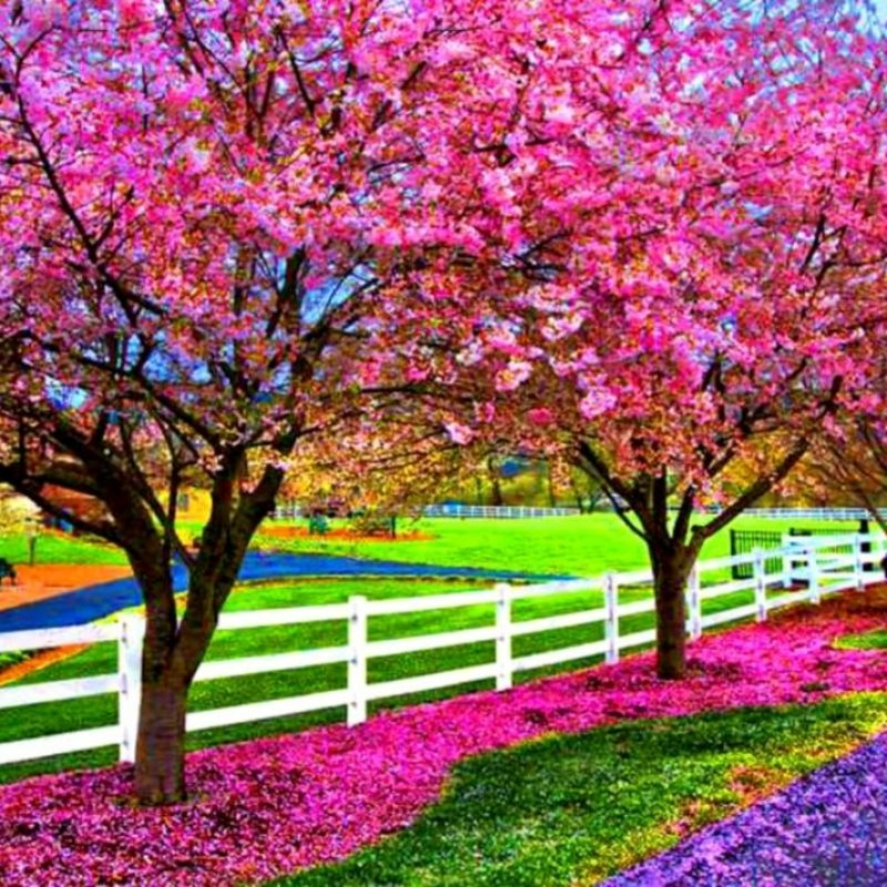 10 Top Beautiful Spring Desktop Backgrounds FULL HD 1080p For PC Desktop 2018 free download beautiful spring day wallpaper wallpapers gallery 800x800