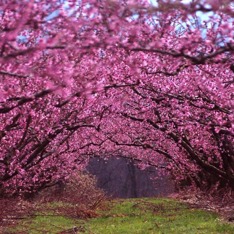 10 Top Beautiful Spring Desktop Backgrounds FULL HD 1080p For PC Desktop 2018 free download beautiful spring wallpapers wallpaper cave 800x800