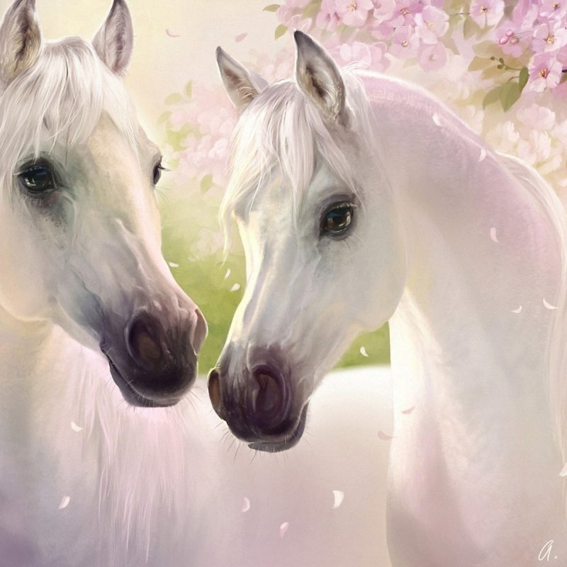 10 New Beautiful Horses Pictures Wallpapers FULL HD 1920×1080 For PC Desktop 2020 free download beautiful white horses photos good pix gallery one cent carasol 800x800
