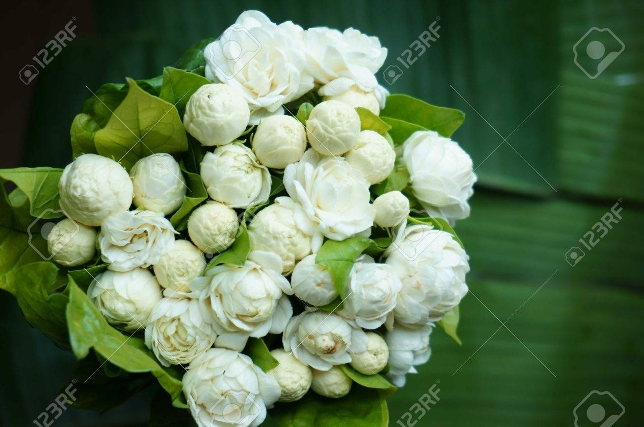 beautiful white jasmine flowers bouquet stock photo, picture and