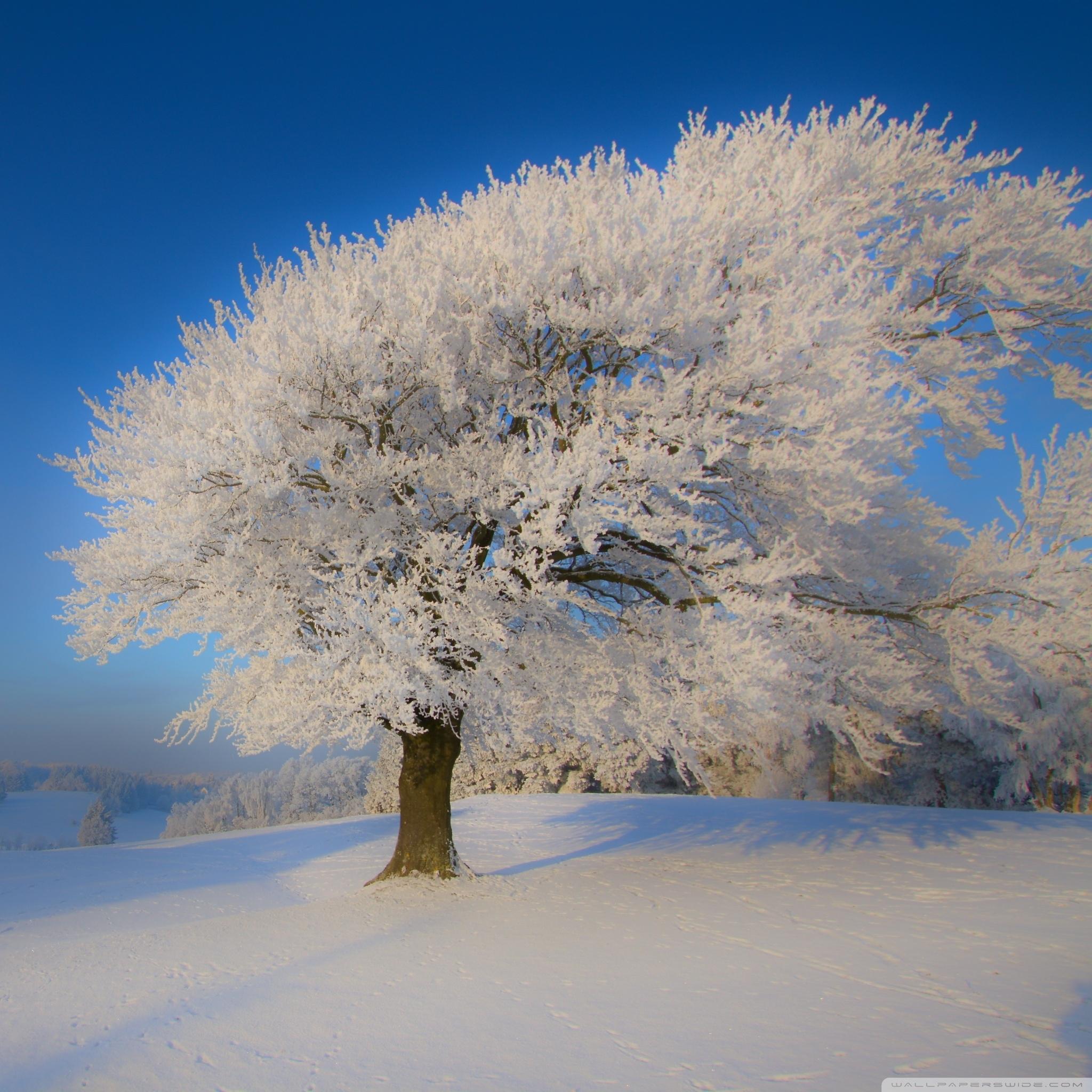beautiful winter landscape ❤ 4k hd desktop wallpaper for 4k ultra
