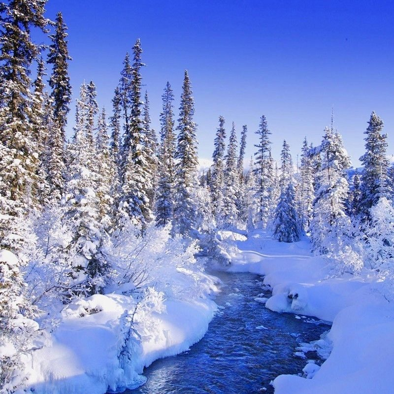 10 New Winter Wonderland Screensavers Free FULL HD 1080p For PC Desktop 2018 free download beautiful winter wonderland nature wallpapers pictures just things 800x800
