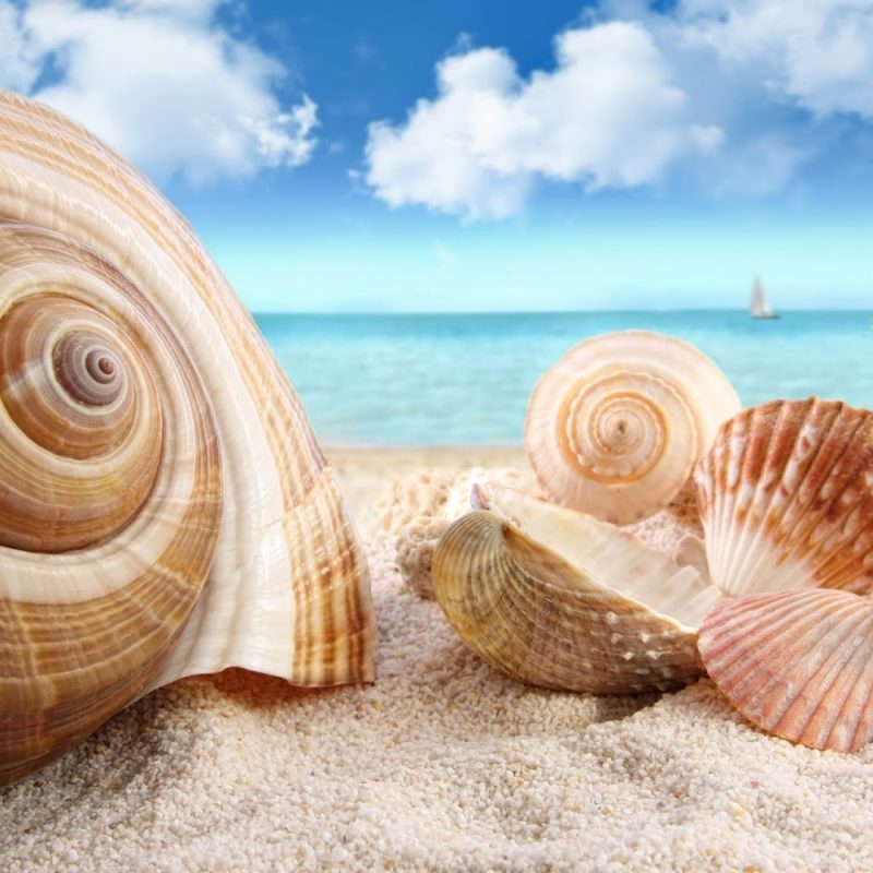 10 New Sea Shell Wall Paper FULL HD 1080p For PC Background 2021 free download best beach wallpaper free seashell 813098 beach 800x800
