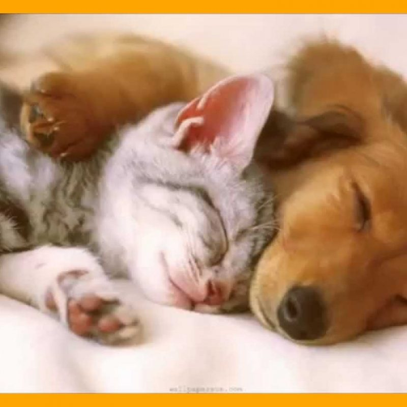 10 Latest Cute Puppy And Kitten Pics FULL HD 1080p For PC Desktop 2018 free download best cute puppies and cats pict of puppy kitten trends styles cute 800x800