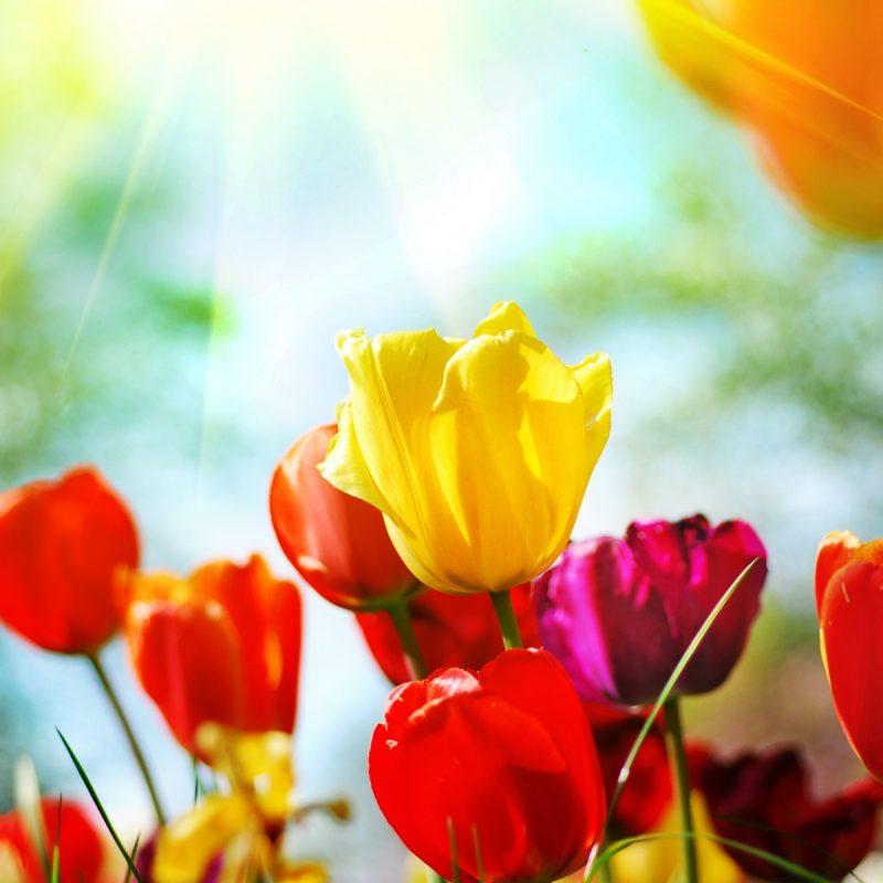 10 New Spring Flowers Background Desktop FULL HD 1920×1080 For PC Desktop 2018 free download best free flower desktop backgrounds high resolution spring 800x800