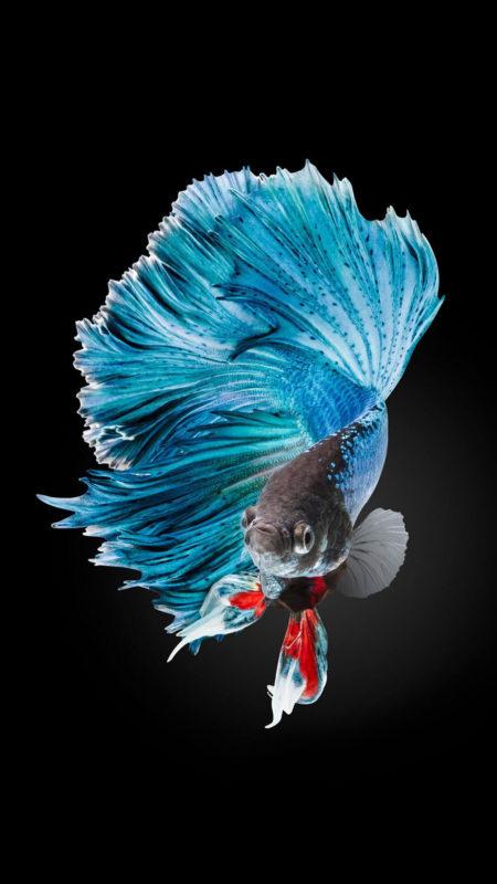 10 Latest Iphone Fish Wallpaper FULL HD 1080p For PC Desktop 2021 free download betta fish wallpaper iphone 6 and iphone 6s hd animal wallpaper 450x800