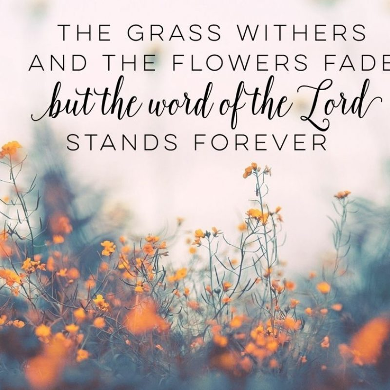 10 Latest Desktop Backgrounds Bible Quotes FULL HD 1920×1080 For PC Background 2021 free download bible verse desktop wallpaper desktop wallpapers pinterest 2 800x800
