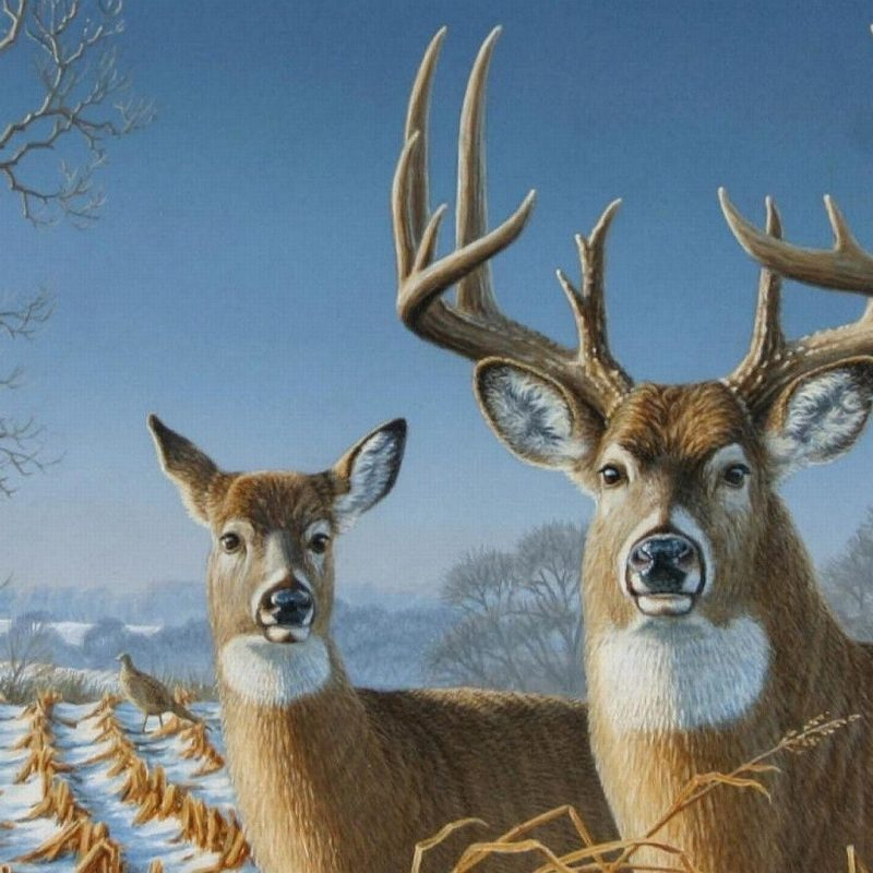 10 Most Popular Monster Whitetail Buck Pictures FULL HD 1080p For PC Desktop 2018 free download big whitetail buck wallpaper 56 images 800x800