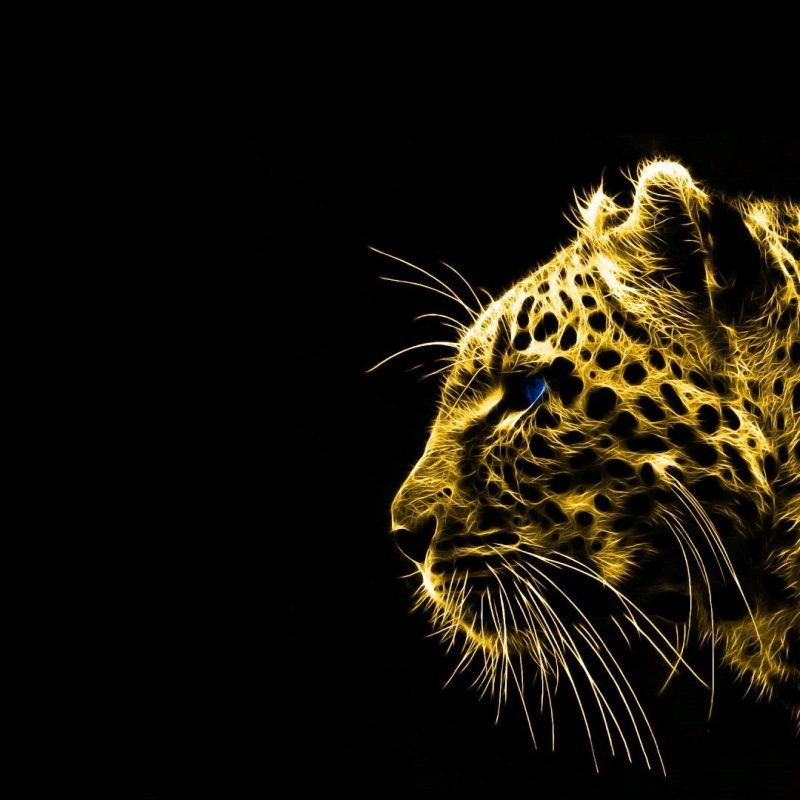 10 New Black And Gold Wallpaper Hd FULL HD 1080p For PC Background 2021 free download black and gold hd wallpapers pc wallpaper pinterest animal 800x800