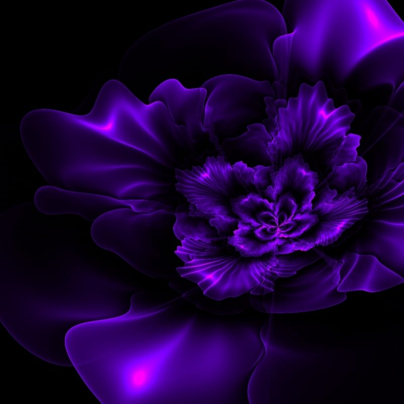 10 Most Popular Black And Purple Flower Wallpaper FULL HD 1080p For PC Background 2018 free download black and purple floral wallpaper dark purple flowers pictures 06 800x800