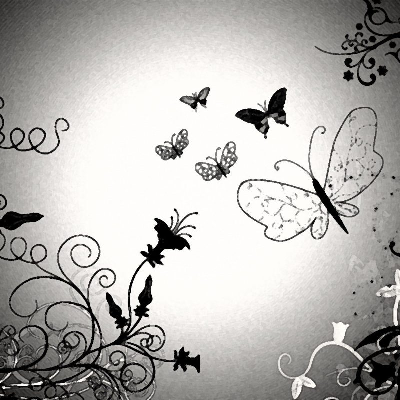 10 Best Butterfly Wallpaper Black And White FULL HD 1920×1080 For PC Desktop 2018 free download black and white butterfly wallpaper hd 9398 hd wallpaper download 800x800