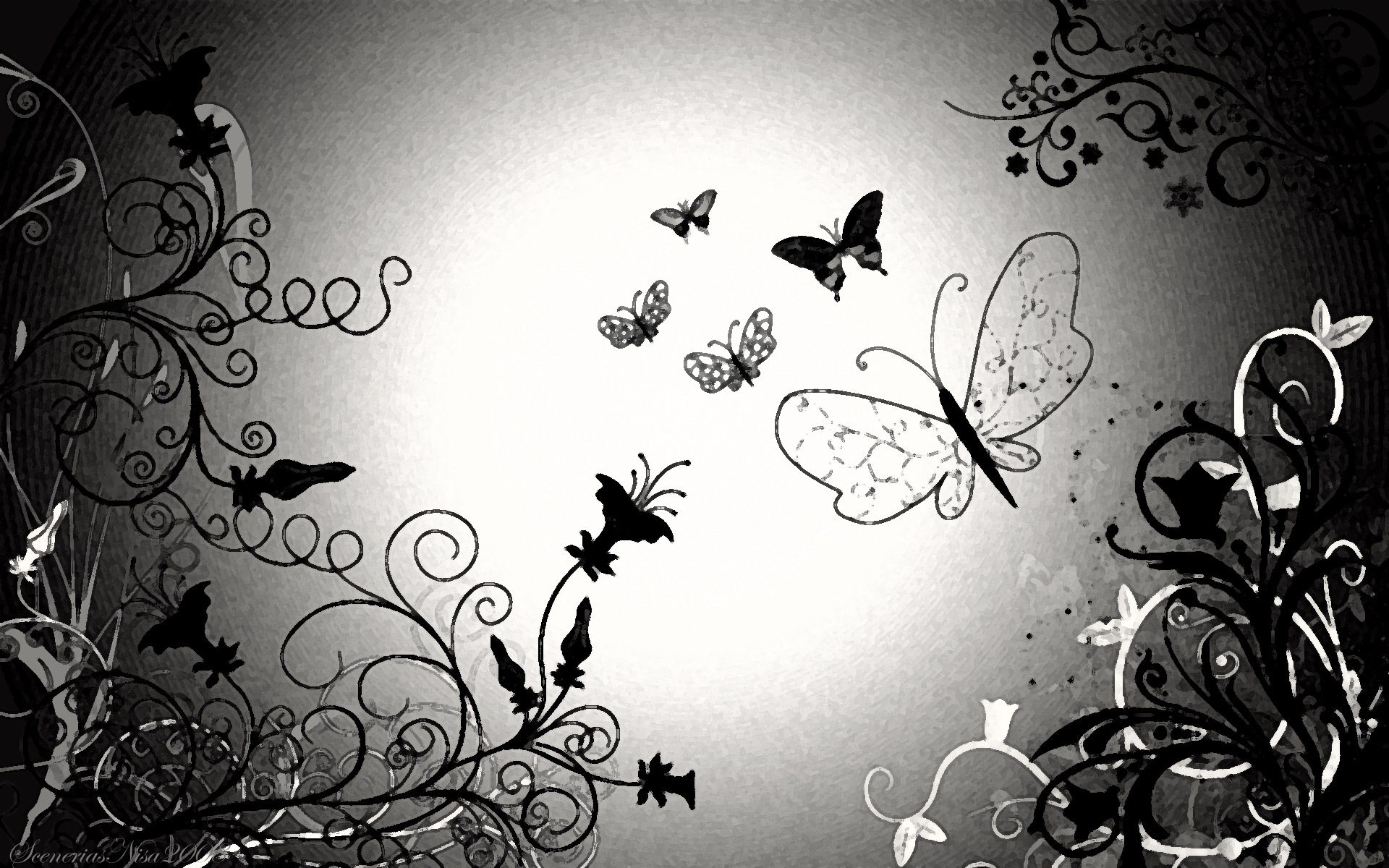 black and white butterfly wallpaper hd #9398 hd wallpaper | download
