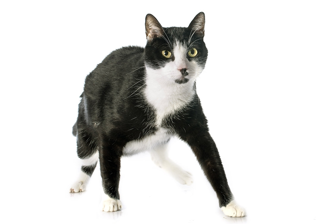 black and white cat names - 59+ awesome names for your cat