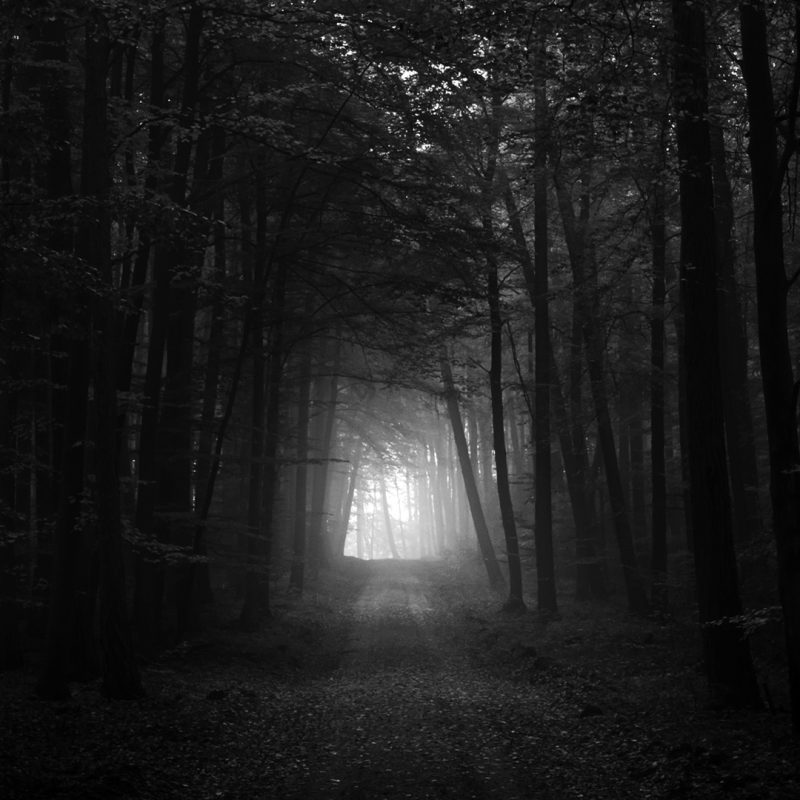 10 Top Dark Forest Hd Wallpaper FULL HD 1920×1080 For PC Desktop 2020 free download black and white dark forest hd wallpaper 1920x1080 id40667 800x800