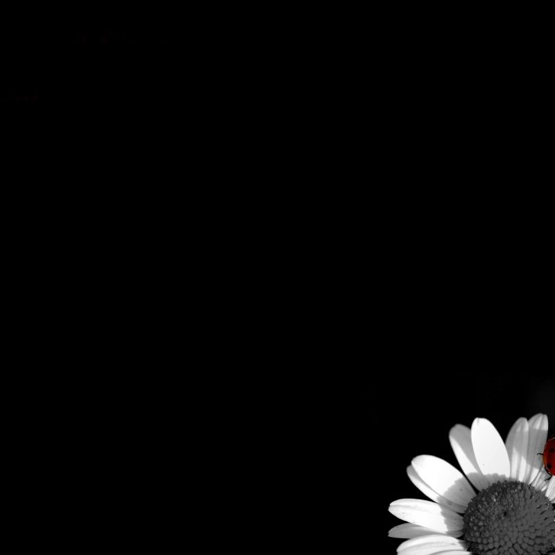 10 Top Black And White Computer Backgrounds FULL HD 1080p For PC Background 2020 free download black and white flowers wallpapers hd pixelstalk 800x800