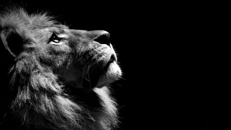 10 Top Black And White Hd Wallpaper FULL HD 1920×1080 For PC Background 2018 free download black and white lion wallpaper hd wallpapers 800x450
