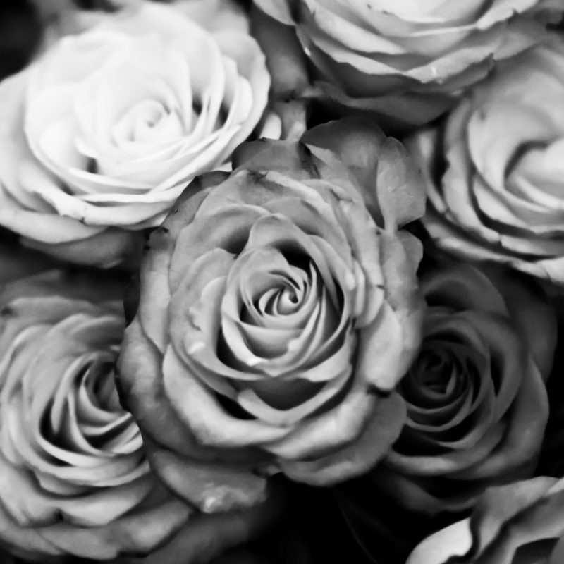 10 Best Black And White Roses Wallpaper FULL HD 1920×1080 For PC Desktop 2020 free download black and white rose wallpaper hd background 9 hd wallpapers 800x800