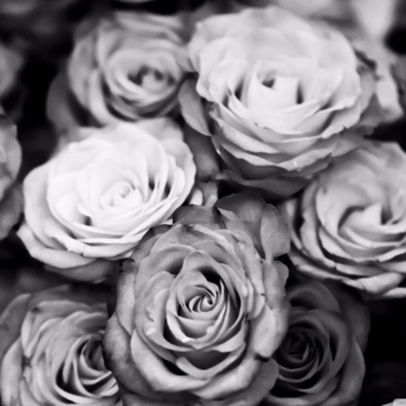 10 Best Black And White Roses Wallpaper FULL HD 1920×1080 For PC Desktop 2021 free download black and white roses wallpaper 4k free 4k wallpaper 800x800