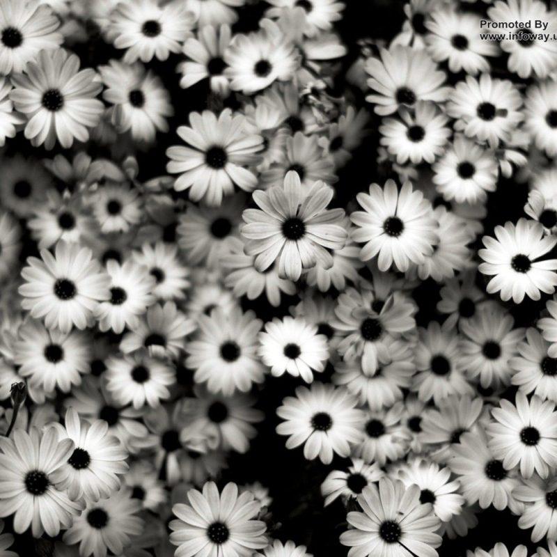 10 Best Black And White Roses Wallpaper FULL HD 1920×1080 For PC Desktop 2020 free download black and white roses wallpaper hd for pc high resolution 800x800