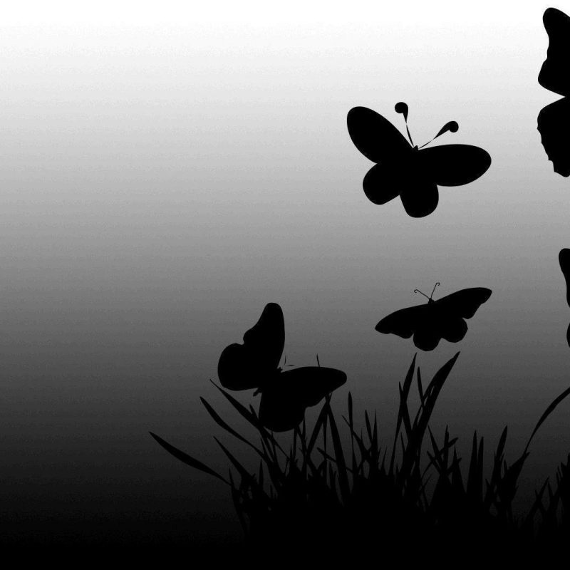 10 Best Butterfly Wallpaper Black And White FULL HD 1920×1080 For PC Desktop 2018 free download black butterfly wallpapers wallpaper cave 800x800