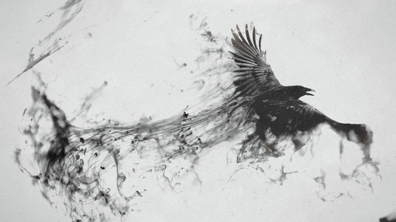 10 Top Black Crow Wallpaper FULL HD 1920×1080 For PC Background 2020 free download black crow 1920x1080 wallpaper 800x450