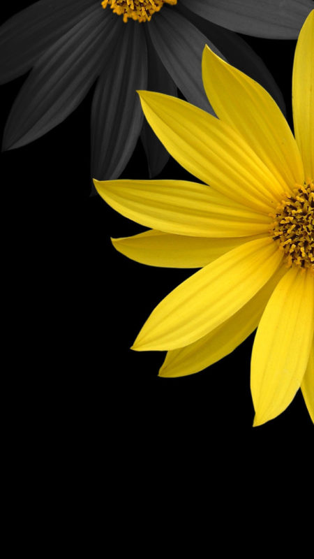 10 Best Black Flower Wallpaper FULL HD 1080p For PC Background 2018 free download black flowers iphone 7 wallpaper 750x1334 450x800