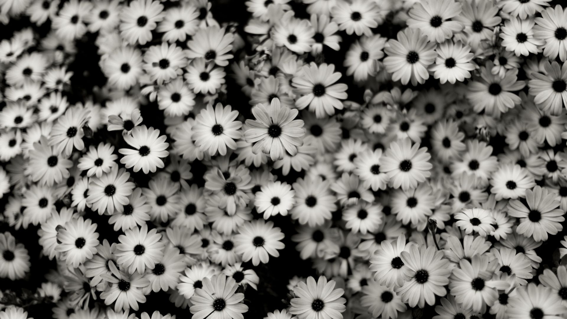 black flowers wallpapers - wallpaper cave