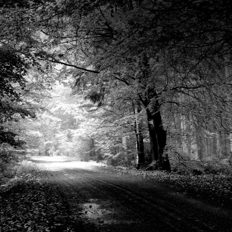 10 Most Popular Black And White Desktop Wallpaper Hd FULL HD 1920×1080 For PC Background 2021 free download black in white nature hd wallpapers for your desktop free download 1 800x800