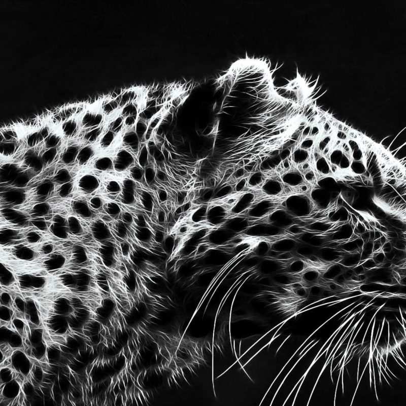 10 Latest Black And White Jaguar Pictures FULL HD 1920×1080 For PC Desktop 2020 free download black jaguar wallpapers group 73 800x800