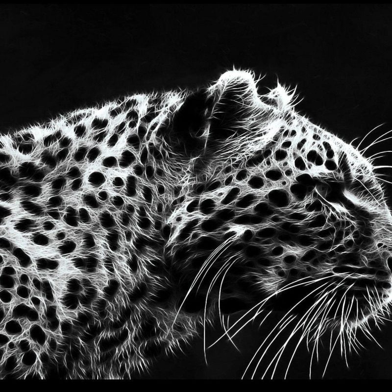 10 Best Black And White Leopard Wallpaper FULL HD 1920×1080 For PC Desktop 2020 free download black leopard backgrounds wallpaper cave 800x800
