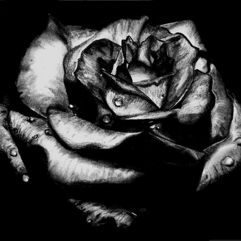 10 New Gothic Black Roses Wallpaper FULL HD 1920×1080 For PC Desktop 2020 free download black rose gothic picture wallpaper roses pinterest gothic 800x800