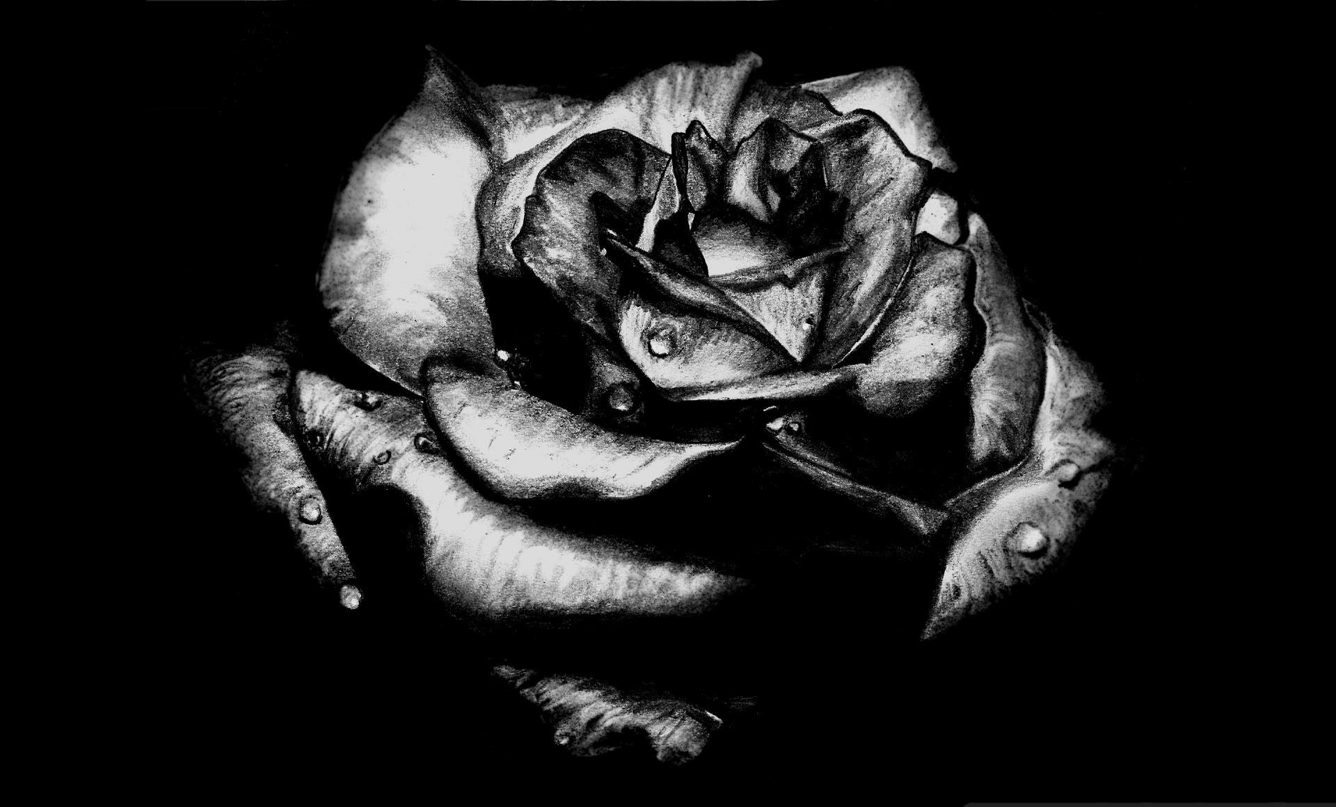 black rose gothic picture wallpaper | roses | pinterest | gothic