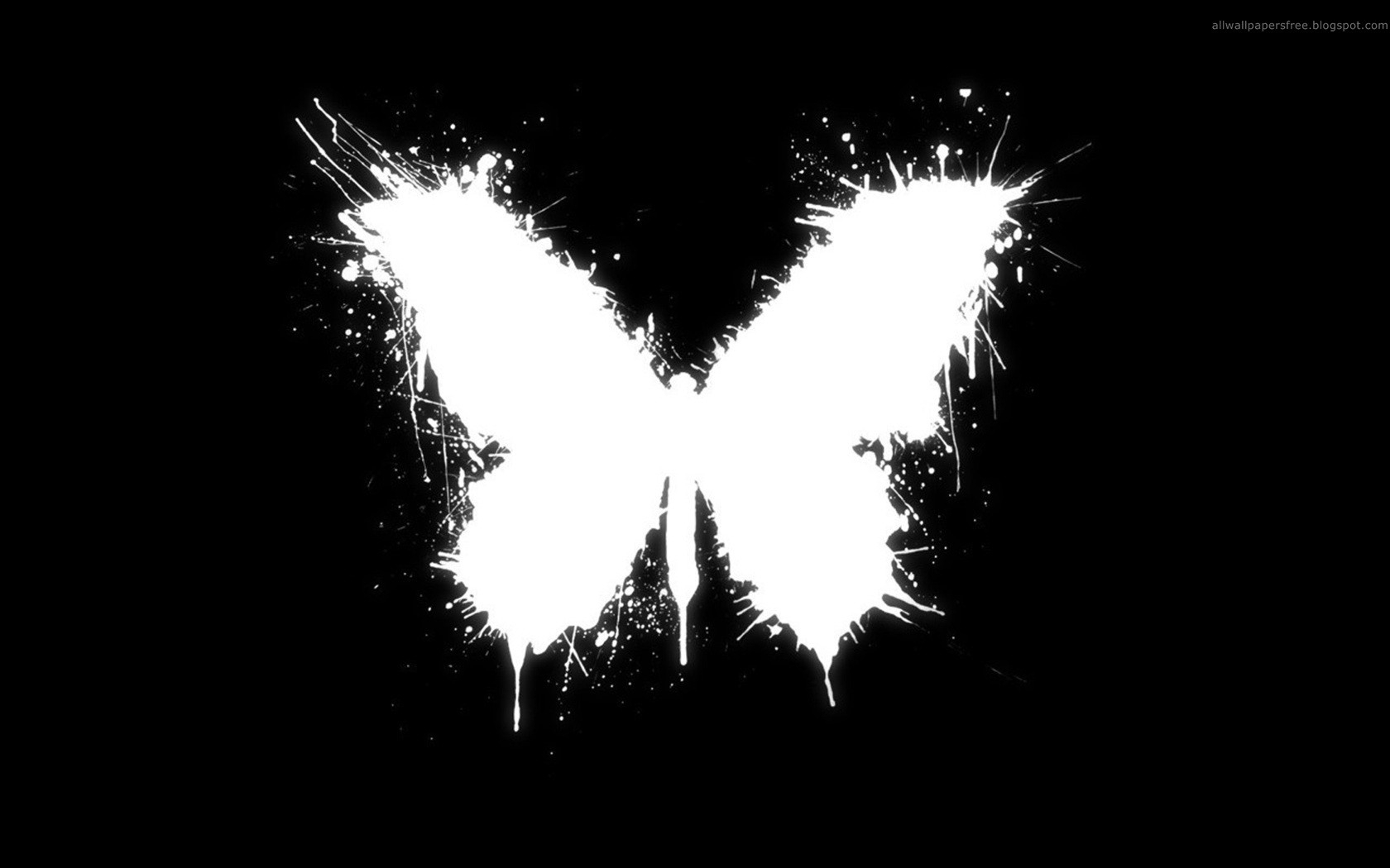 black & white - butterfly wallpaper and background image | 1680x1050