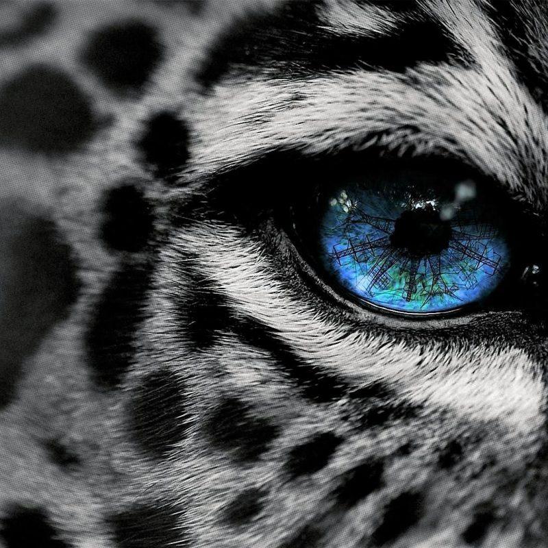 10 Latest Black And White Jaguar Pictures FULL HD 1920×1080 For PC Desktop 2021 free download black white jaguar wallpaper wallpaper studio 10 tens of 800x800