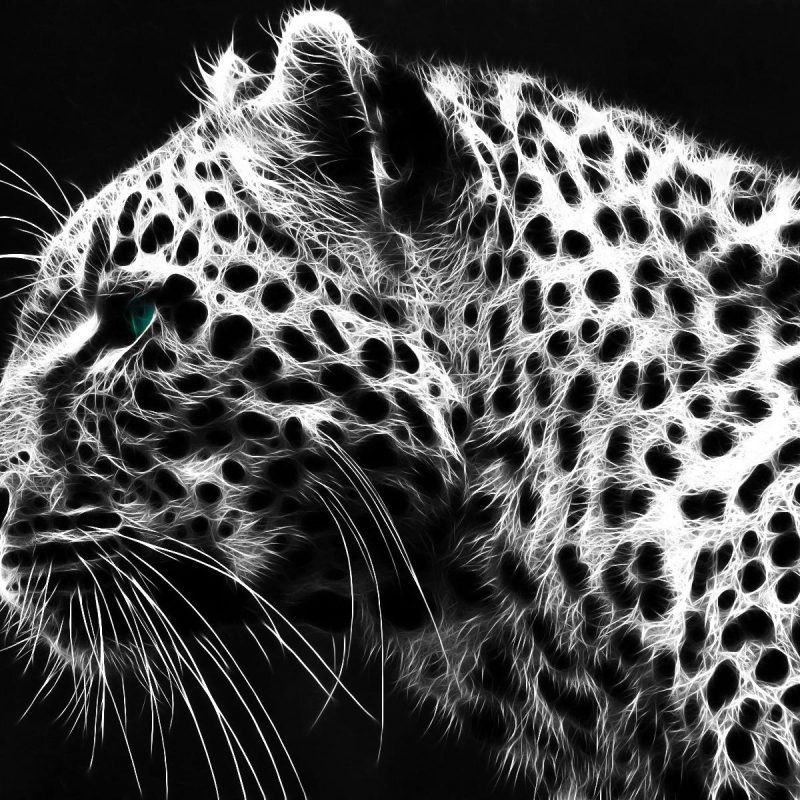 10 Best Black And White Leopard Wallpaper FULL HD 1920×1080 For PC Desktop 2020 free download black white leopard wallpaper animals wallpaper better 800x800
