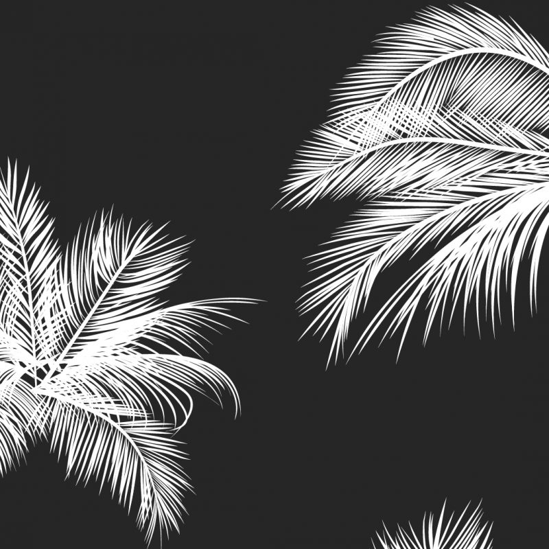 10 Top Black And White Walpapers FULL HD 1080p For PC Desktop 2018 free download black white palm leaves palm trees like and repin noelito flow 800x800
