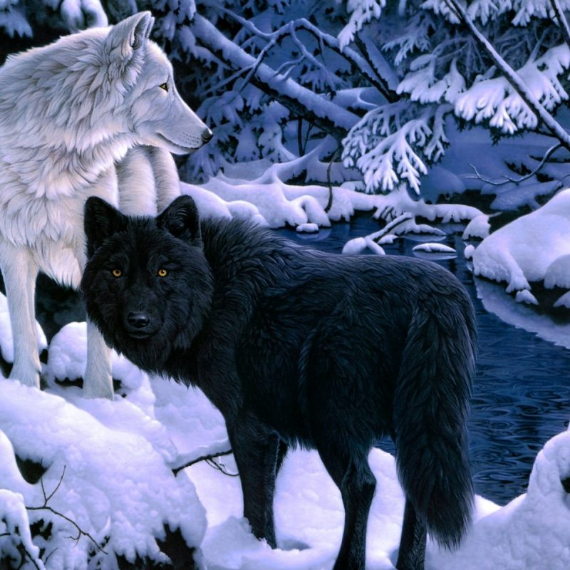 10 Top Black And White Wolves Together Wallpaper FULL HD 1080p For PC Background 2021 free download black white wolf backgrounds wallpaper wiki 800x800