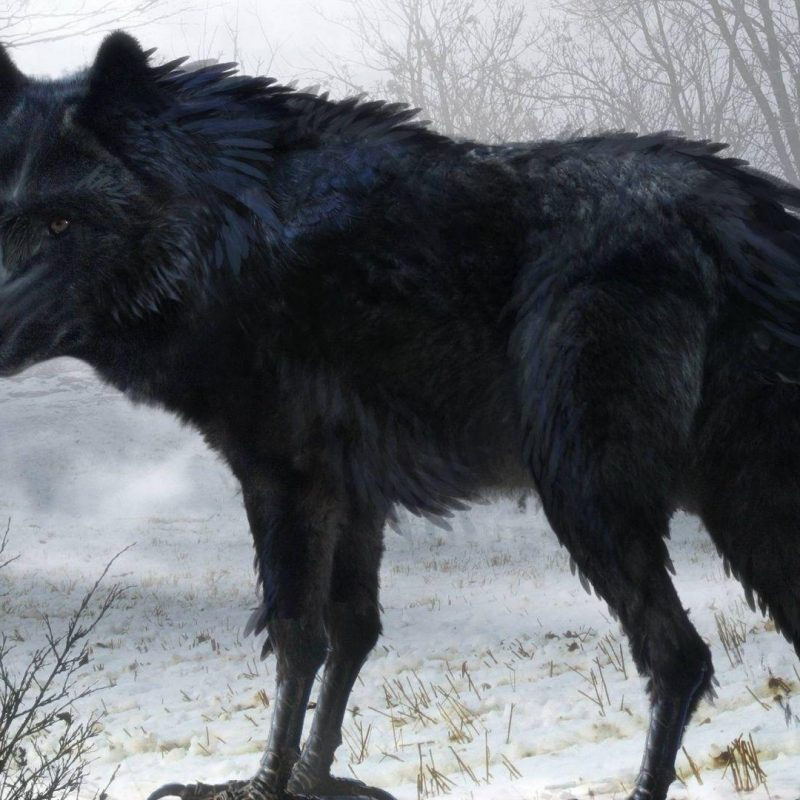 10 New Black Wolf Wallpaper 1920X1080 FULL HD 1920×1080 For PC Desktop 2021 free download black wolf wallpapers wallpaper cave 800x800