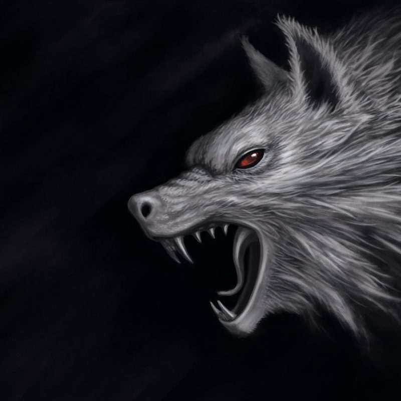 10 New Dark Wolf Wallpaper Hd FULL HD 1920×1080 For PC Desktop 2021 free download black wolf wallpapers wallpaper hd wallpapers pinterest wolf 800x800