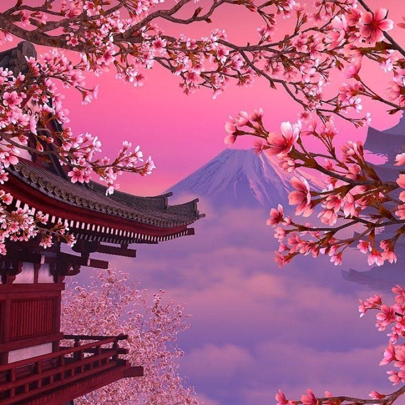 10 Most Popular Sakura Cherry Blossom Wallpaper FULL HD 1920×1080 For PC Desktop 2020 free download blooming sakura 3d screensaver live wallpaper hd youtube 800x800