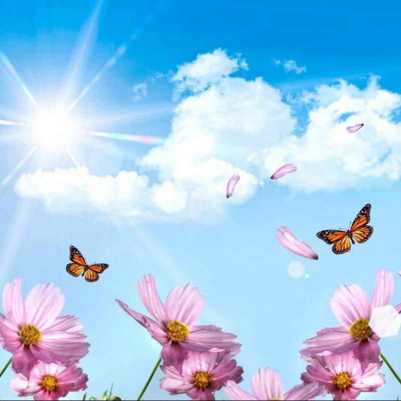 10 Top Desktop Flowers Wallpaper Backgrounds FULL HD 1080p For PC Background 2020 free download blue flower wallpaper 47 800x800