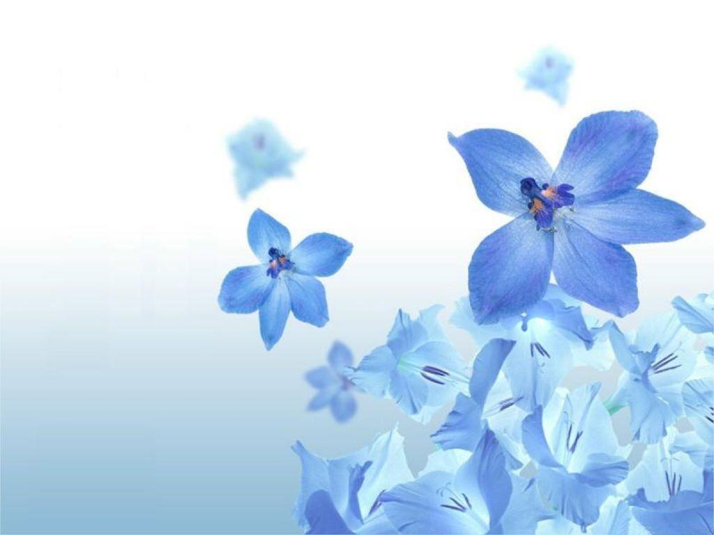 blue flower wallpapers - wallpaper cave