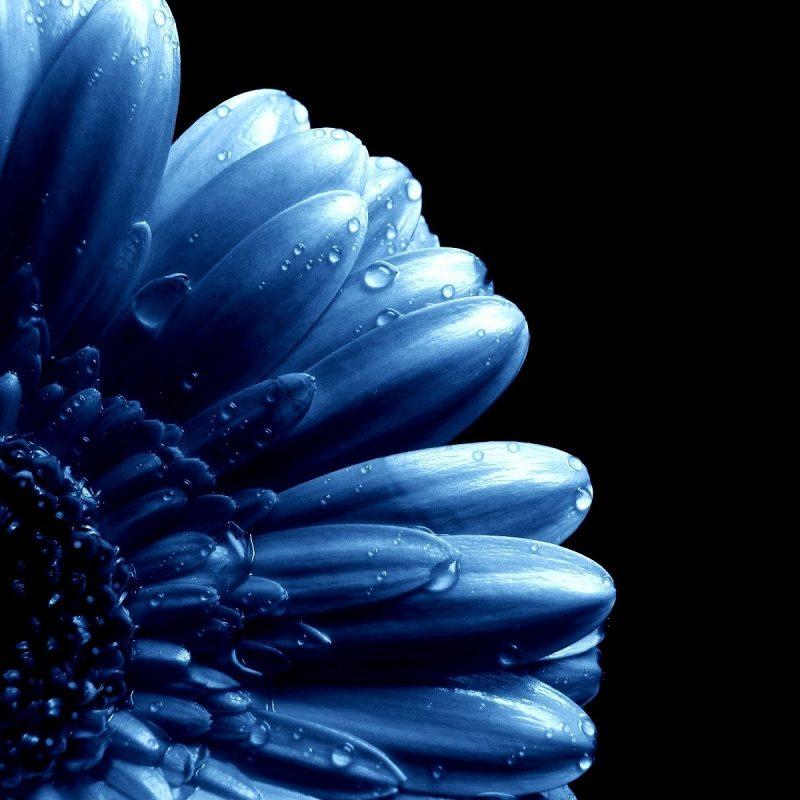 10 Top Dark Blue Flower Wallpaper FULL HD 1080p For PC Background 2021 free download blue flowers blue flower stock blue on blue pinterest blue 800x800